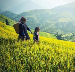 Glanzpunkte Vietnams Badeurlaub in Nha Trang