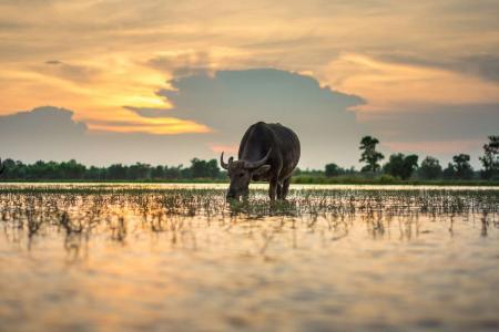 entlang-des-mekongs-von-nordthailand-nach-sudlaos_29499