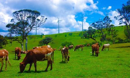 kulturelles-erbe-und-naturliche-schonheit-sri-lankas-mit-baden-auf-den-malediven_37267