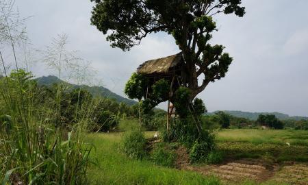 kulturelles-erbe-und-naturliche-schonheit-sri-lankas-mit-baden-auf-den-malediven_37265