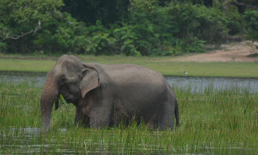 Private Sri Lanka Highlights mit Baden in Kalutara oder auf den Malediven_38078