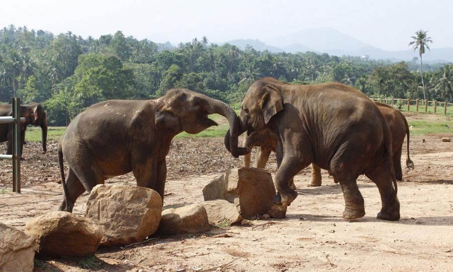 Private Sri Lanka Highlights mit Baden in Kalutara oder auf den Malediven_38076