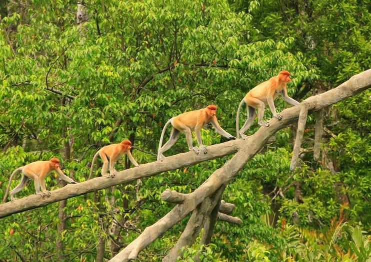 Entdeckungsreise durch Borneo mit Badeurlaub_38207