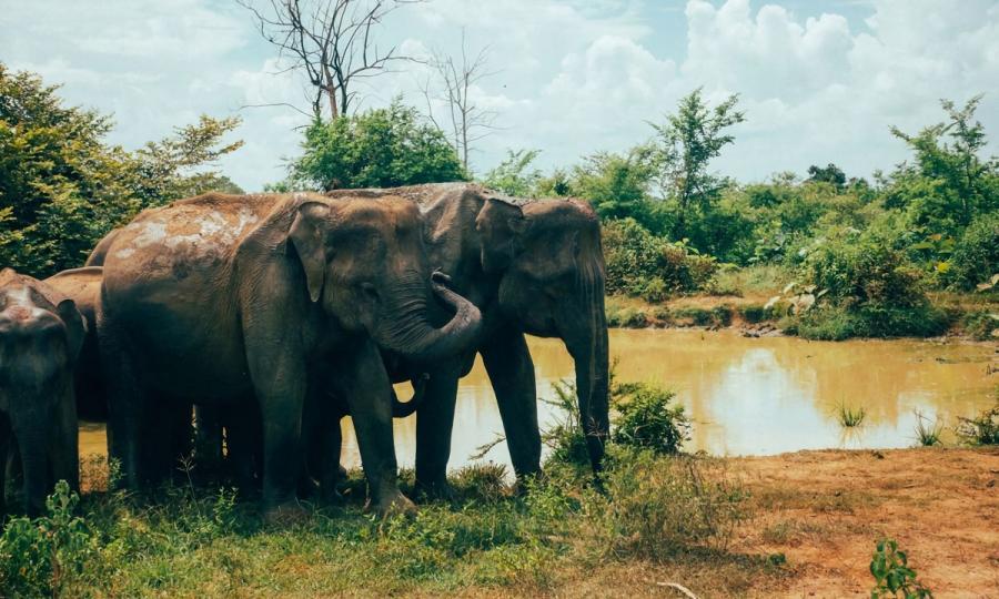 Faszination Sri Lanka mit Abstecher in den unbekannten Norden_38046