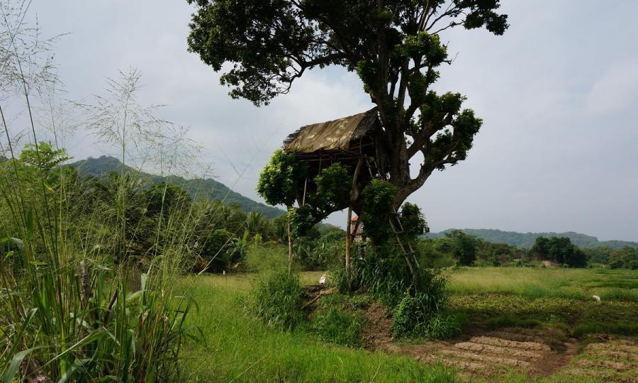 Kulturelles Erbe und natürliche Schönheit Sri Lankas mit Baden auf den Malediven_37265