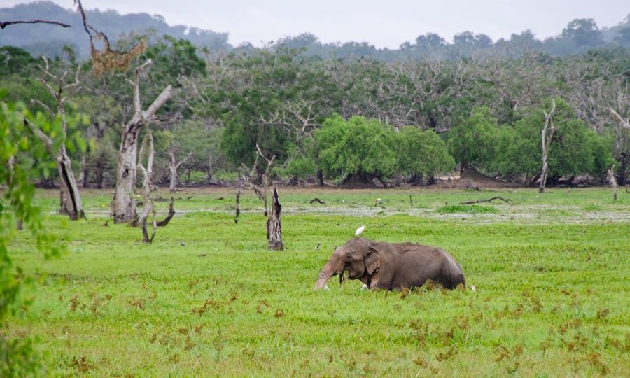 Kulturelles Erbe und natürliche Schönheit Sri Lankas mit Baden auf den Malediven_37264