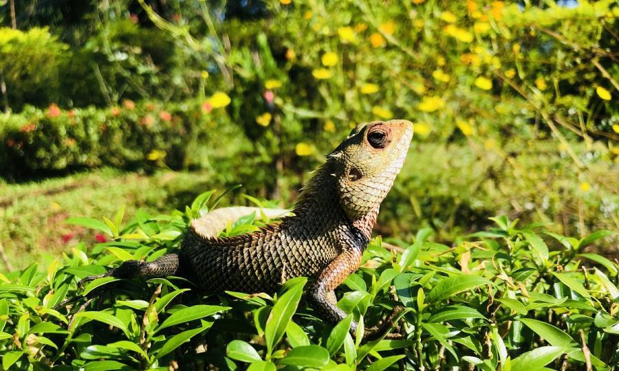 Kulturelles Erbe und natürliche Schönheit Sri Lankas mit Baden auf den Malediven_37262